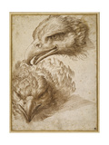 Studies of an Eagle's Head Giclee Print by Perino Del Vaga