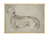 A Hound Giclée-tryk af Francesco Bassano