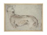 A Hound Giclee Print by Francesco Bassano