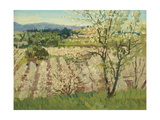 Prune Orchard, Los Gatos, California Giclee Print by Theodore Wores