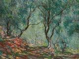 Olive Trees in the Moreno Garden  1884