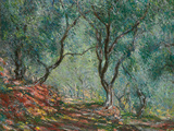 Olive Trees in the Moreno Garden, 1884 Giclee Print by Claude Monet