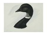Canadian Goose Giclee Print by Edward Adams