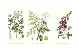 Common Poisonous Plants, C.1890 Giclee Print