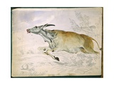 Eland Running from Damara with Spear, 1862 Giclee Print by Thomas Baines