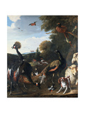 Peacocks and Other Birds, with a Sheep and Dog in a Landscape Giclee Print by Melchior de Hondecoeter