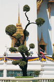 Small Tree at Buddha Temple Photographic Print