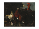 A Hen, Rooster and Turkey in a Farmyard Giclee Print by Melchior de Hondecoeter