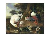 Farmyard Ducks Giclee Print by Melchior de Hondecoeter