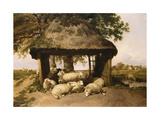 Sheep Resting under a Shelter Giclee Print by Thomas Sidney Cooper
