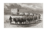 Driving Oxen across the Great Plains of America in 1867, Illustration from 'The World in the… Giclee Print by Ange-Louis Janet
