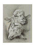 Study of Two Sheep, 1768 Giclee Print by Jean-Baptiste Huet