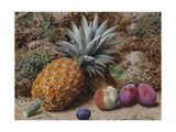 A Pineapple, a Peach and Plums on a Mossy Bank Giclee Print by John Sherrin