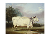 A Prize Cow, 1838 Giclee Print by William Henry Davis
