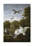 Swans, Ducks and Other Birds in a Park Giclee Print by Pieter Casteels