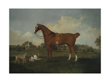 A Bay Hunter with Two Hounds in a Landscape, with a Mansion Beyond, 1779 Giclee Print by Charles Towne