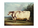 A Prize Bull, 1839 Giclee Print by William Henry Davis