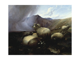 Highland Sheep in a Mountainous Landscape, 1854 Giclee Print by Thomas Sidney Cooper