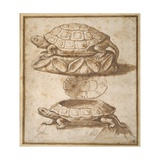 Design for a Lidded Box in the Shape of a Tortoise, Shown Open and Shut Giclée-tryk af Giulio Romano