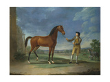 An Arab Stallion Held by a Groom Giclee Print by Sawrey Gilpin