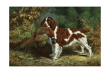 A Welsh Springer Spaniel Holds a Dead Bird in its Mouth Giclee Print by Walter Alois Weber