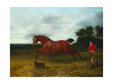 A Groom with a Terrier Bringing in a High Spirited Stallion Giclee Print by Sawrey Gilpin