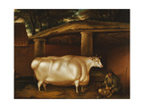 The White Heifer That Travelled, with a Man Slicing Turnips in a Stable Yard, 1811 Giclee Print by Thomas Weaver