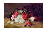 Still Life of Chrysanthemums and Camelias, 1883 Giclee Print by W. R. Thompson