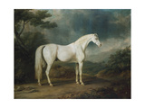 White Horse in a Wooded Landscape, 1791 Giclee Print by Sawrey Gilpin