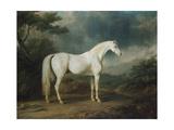 White Horse in a Wooded Landscape, 1791 Lámina giclée por Sawrey Gilpin