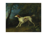 A Brown and White Setter in a Wooded Landscape, 1773 Giclee Print by Sawrey Gilpin