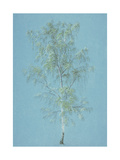 Birch Tree Giclée-Druck von William Turner