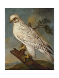A Falcon on a Branch, 1736 Giclee Print by Ferdinand Phillip de Hamilton