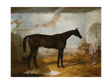 Mr A.W. Hill's Bay Colt 'Sweetmeat' in a Loose Box, 1845 Giclee Print by Harry Hall