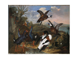 Shell Ducks and Other Fowl in a Landscape, 1720 Giclee Print by Ferdinand Phillip de Hamilton