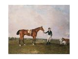 Zinganee' Held by Sam Chifney Jr. at Newmarket, 1829 Giclee Print by Benjamin Marshall