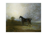 Bembo, a Favourite Hunter of Charles Shuttleworth, Esq., 1802 Giclee Print by Benjamin Marshall