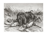 A Rhinoceros Attacks an Expedition, from 'Africa Pintoresca', Published 1888 Giclee Print