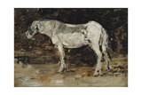 White Horse, C.1885-90 Giclee Print by Eugène Boudin