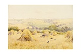 View of a Cornfield with Rooks Giclee Print by Harry E. James