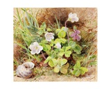 Sorrel and Shell, C.1865-74 Giclee Print by Helen Cordelia Coleman Angell