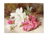 Azalea Bloom, C.1865-74 Giclee Print by Helen Cordelia Coleman Angell