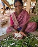 Sericulture: Small-Scale Silkworm (Bombyx Mori, Domestic) Farming in Village: Woman Showing… Photographic Print