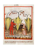 Tacuinum Sanitatis. Late 14th Century. Farmers in a Banana Plantation. Miniature Giclee Print
