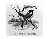 The Cole-Titmouse, Illustration from 'The History of British Birds' by Thomas Bewick, First… Giclee Print by Thomas Bewick