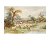 Landscape and Sheep Giclee Print by M.C. Parsons