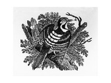 The Barred Woodpecker, Illustration from 'The History of British Birds' by Thomas Bewick, First… Giclee Print by Thomas Bewick