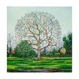 Bow Tree Winter Giclee Print by Noel Paine