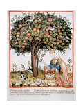 Tacuinum Sanitatis. Late Xiv Century. Picking Bitter Pomegranate Giclee Print