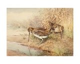 Snipe Giclee Print by William Woodhouse